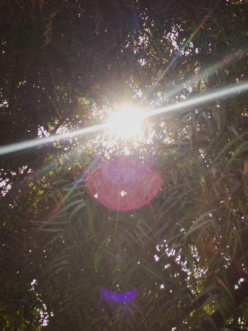 Sunshine through the trees... Tree Forest Branch Tree Area Star - Space Leaf Sky Shining Treetop Sunbeam Sun