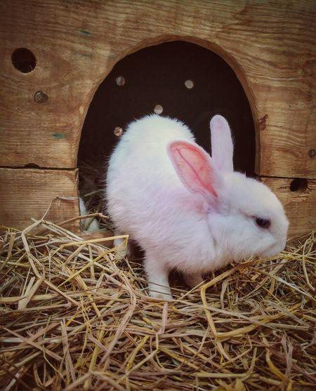 Cute Rabbit Cute Pets Cute Rabbit ,bunny Bunny 🐰 White Rabbit Rabbit 🐇 Pets Close-up Rabbit Rabbit - Animal Animal Ear