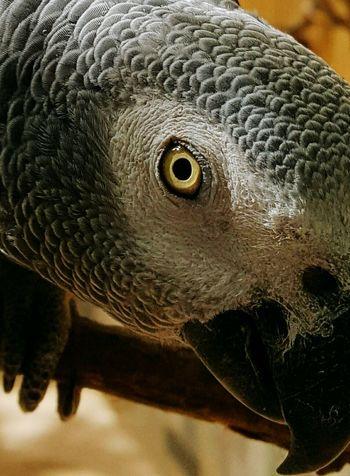 One Animal Animal Head  Animal Themes Bird Birdphotography Bird Photography One Animal Close-up Animal Themes Animal Head  Bird Of Prey No People