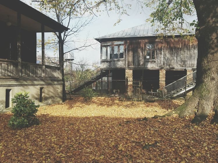 Built Structure Building Exterior Architecture Outdoors No People House Tree Day Grass Yellow Yellow Leaves Fall Fall Beauty Fall Colors Fall Leaves Fall Collection Fallen Leaves Fall Collection Fall Season Golden Leaves Lime Tree Home Sweet Home