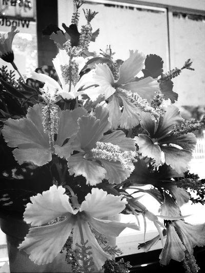 Flowers Black&white First Eyeem Photo