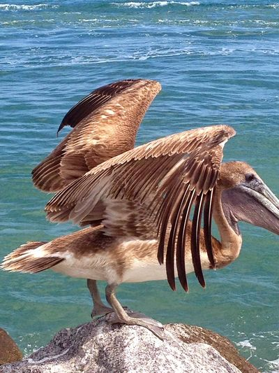 Sea Sea Life Animals In The Wild Fish Underwater Water Animal Wildlife Nature One Animal Outdoors Animal Themes Older Photo Pelican