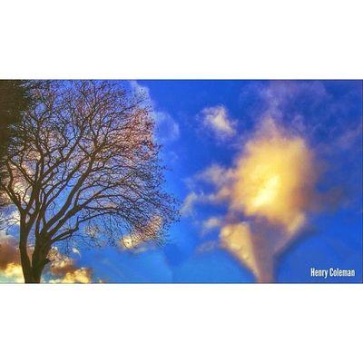 """Brighter Days, Beautiful Memories"" London London_only Londonpop Udog_edit Ig_europe Ig_europe_london Udog_peopleandplaces Icu_britain Streetshot_london The_photographers_emporium 16x9 16x9vision Big_shotz 16x9photography Edit_specialist 16x9etiquette Chasinglight Udog_sky Udog_nature"