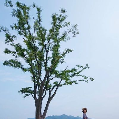 심플하게 Simplicity wins 두물머리 Solo_tree