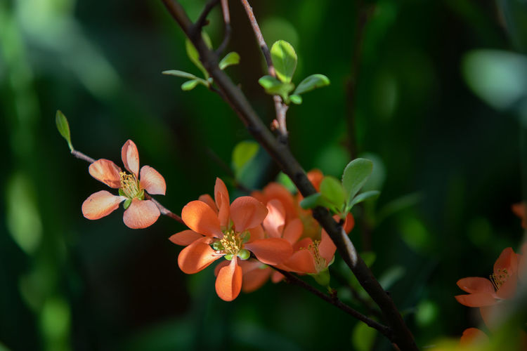 Close-up of orange flowers growing on plant