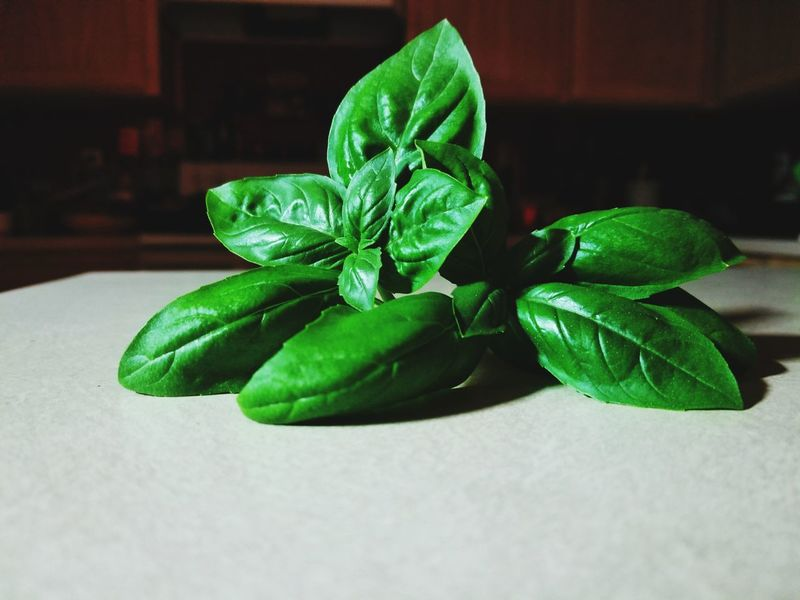 Fresh Genovese Basil from my Aerogarden Basil Genovese Culinary Food Cooking Herb Homegrown Delish Spice Seasoning Flavor Produce Green Color Leaf Indoors  Plant No People Nature Close-up Freshness