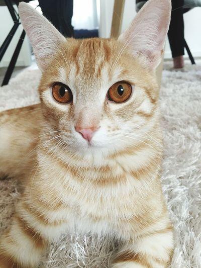 Cat Cat Pets