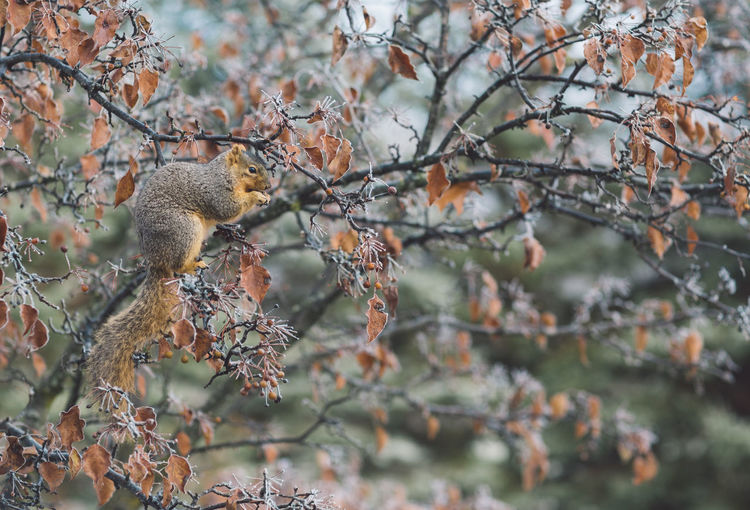 Squirrel Tree Branch Plant Animal Wildlife Animals In The Wild Animal Nature Animal Themes One Animal No People Day Focus On Foreground Mammal Outdoors Vertebrate Growth Selective Focus Plant Part Leaf Autumn Change