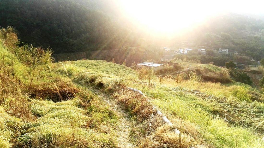 夕阳下的油菜地 Nature No People Sunlight Beauty In Nature Tranquility Outdoors Landscape