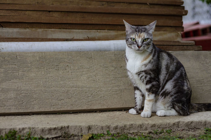 Cat Domestic Domestic Animals Pets Feline Mammal Domestic Cat One Animal Sitting Whisker Looking At Camera