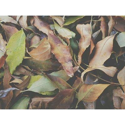 They just keep falling. Leaves Leaf Green Brown ColorsFallFallingLeavesRakingEarlierSoManyXperiazsonypotdVscoVscoCamxVisualshappysundayIstillwantACameraSoon
