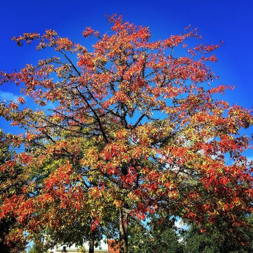 Sky Low Angle View Nature Plant No People Multi Colored Clear Sky Beauty In Nature Blue Day Growth Tree Outdoors Tranquility Flowering Plant Flower Decoration Scenics - Nature Sunlight Abundance