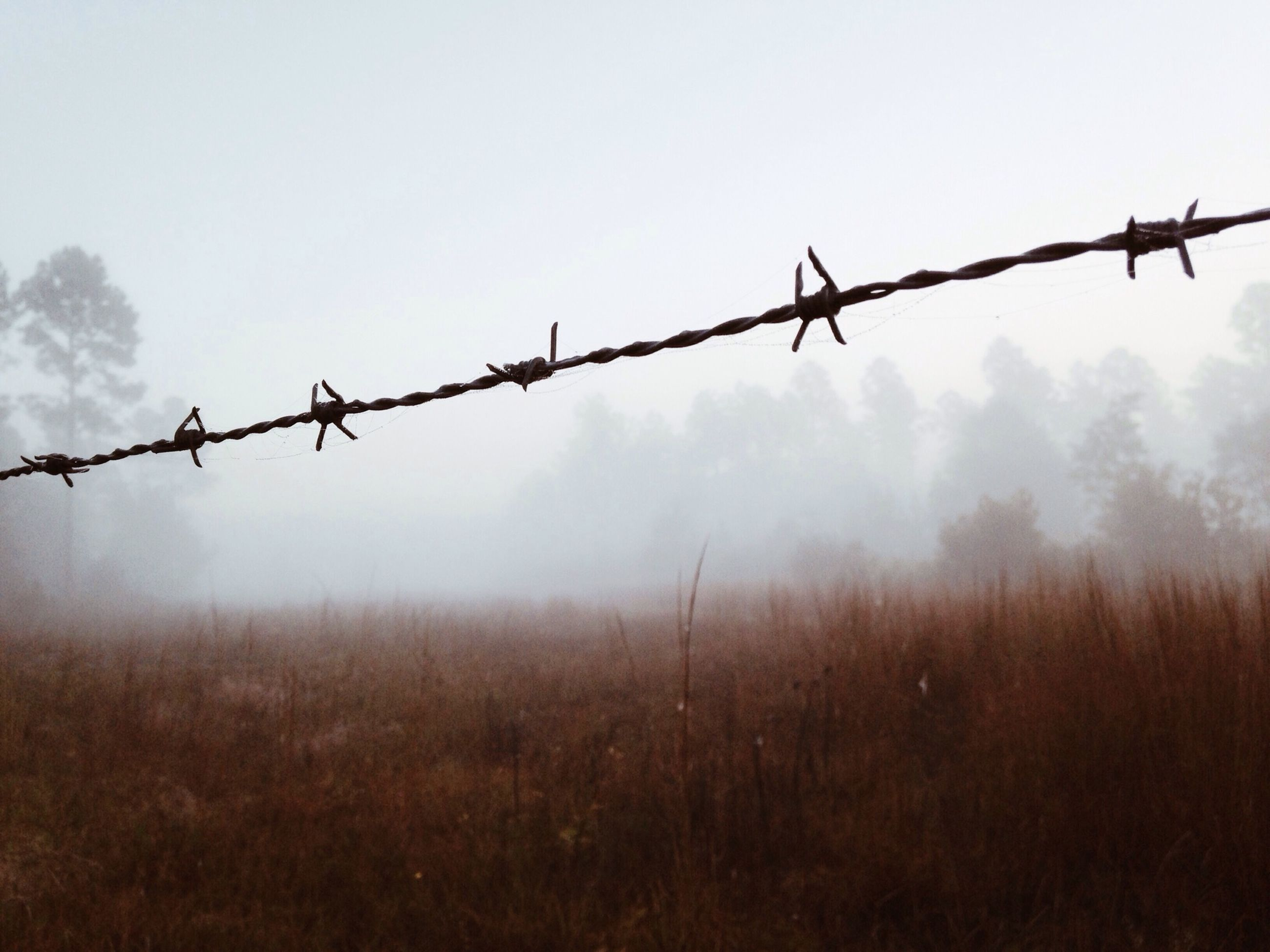 barbed wire, fence, safety, protection, security, focus on foreground, sky, clear sky, sharp, metal, nature, silhouette, close-up, outdoors, no people, day, wire, bird, field