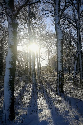 Sunlight Sunbeam Tree Nature Day Lens Flare Sun Outdoors Shadow No People Sky Winter Beauty In Nature Landscape