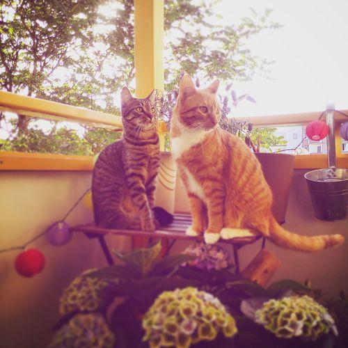 Meine Katzen Balkonglück Cat♡