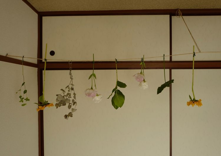 Hanging No People Day Nature Wall - Building Feature Plant Side By Side