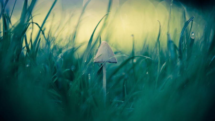 In the middle Beauty In Nature Bokeh Photography Close-up Day EyeEm Gallery Field Fragility Freshness Grass Green Color Growth Macro Photography Mushroom Mushrooms 🍄🍄 Nature No People Outdoors Plant Selective Focus Eyeemselects Perspectives On Nature
