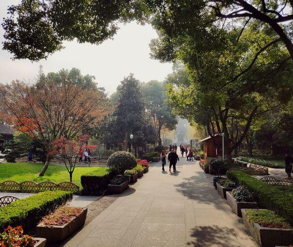 Suzhou, China China Chinese Chinese Garden Traditional China China Today Temple Parc China Trees Garden Landscape Modern China