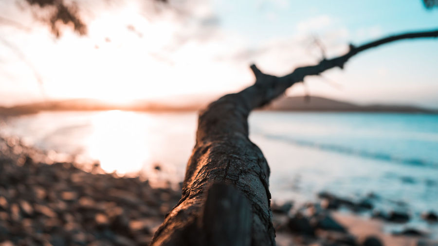 Close-up of tree trunk against sea during sunset