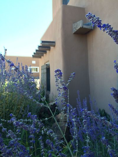 New Mexico Adobe Artitecture Purple Pastel Power Flowering Bushes