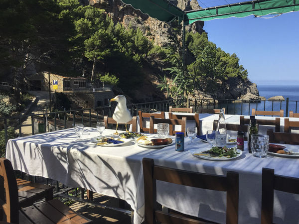 pirates of mallorca Everyday Life Remote Location Stealing Animal Bird Chair Cliffs And Water Food Light And Shadow Nature Place Setting Plate Restaurant Seagull Seaside Smart Animals Surviving Table
