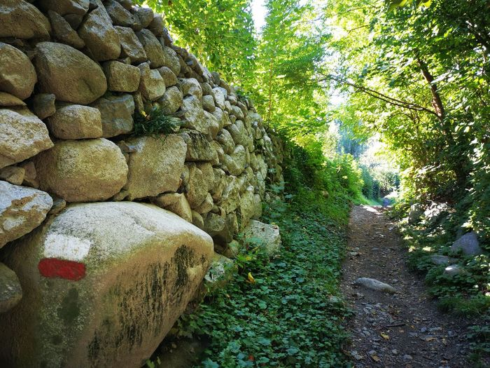 View of stone wall in forest