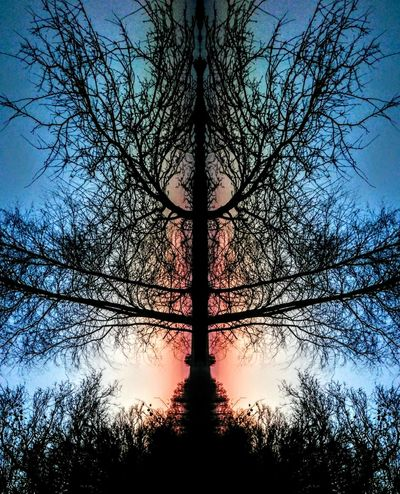 Beautiful Nature in Sundown Tree Silhouette Sky Sunset Nature Low Angle View Tree Trunk Beauty In Nature Tranquility Scenics Growth Day