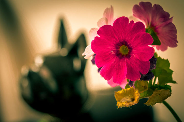 Dof Dof Nature Flower Flower Head Flowers Flowers,Plants & Garden Fucsia Flowers Indoors