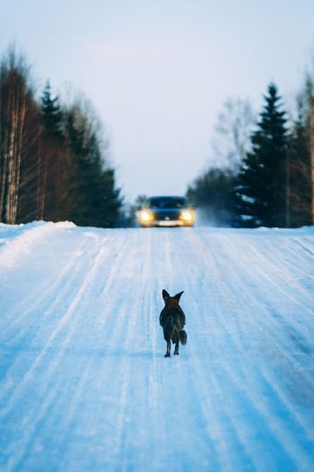 Dog on road in winter