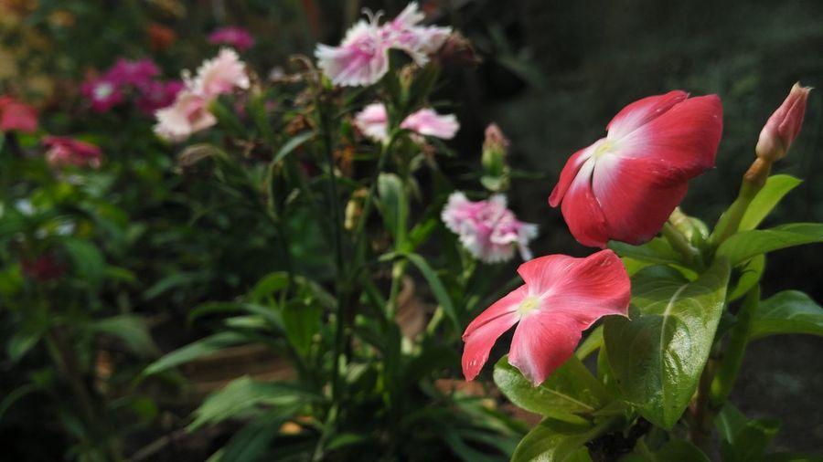 Flowers Nature Mi4i Mobile Photography Closeup Shot Pdphotography