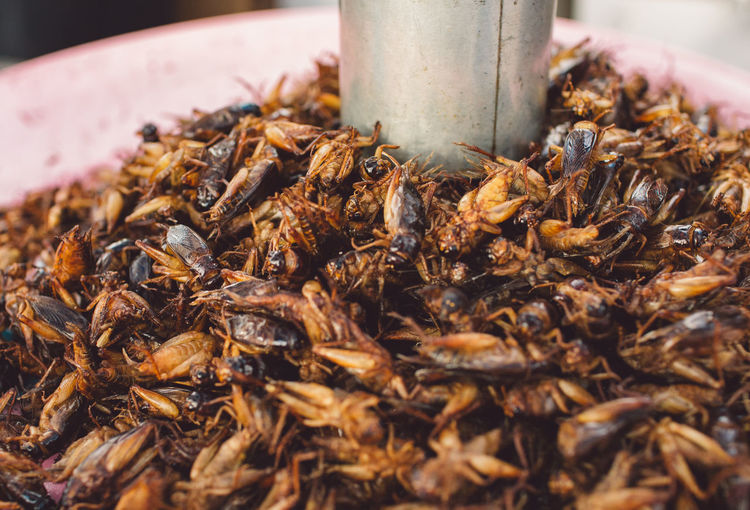 Cambodia Siem Reap Abundance Angkor Close-up Crickets Day Dried Food Dry Focus On Foreground Food Food And Drink Freshness Healthy Eating Insect Insects  Invertebrate Nature No People Outdoors Selective Focus Still Life Tea Tea Leaves Wellbeing
