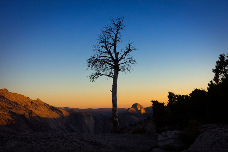 Lone tree silhouette with fading sunlight on Half Dome in distance - Olmsted Point, Yosemite California Dead Tree Golden Half Dome National Parks Pass Silhouette Tree USA Yosemite Backcountry Blue Forest Mountains Olmsted Point Park Pine Tree Sierra Nevada Spring Sun Sunrise Sunset Tioga Wilderness