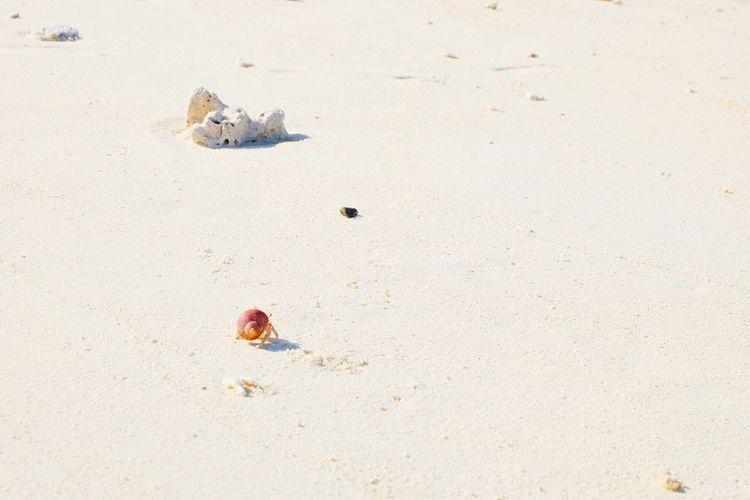 Mr crab. Sand Animal Wildlife Animals In The Wild Outdoors Getoutside Nature Neverstopexploring  Adventure Wanderlust Lifeofadventure Explore The World Sea Sky Beach Sommergefühle