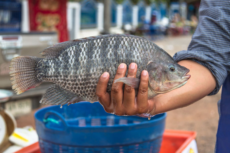 Fish Fisherman Focus On Foreground One Person Real People Tilapia Vertebrate