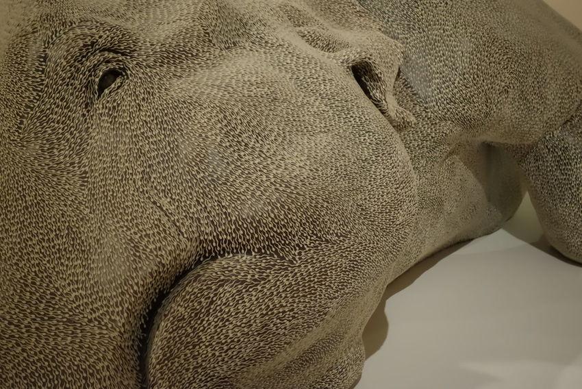 Elephant Sculpture Asia Pacific Triennial Of Contemporary Art