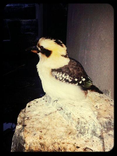 Taking Photos Birds Animal_collection Artis