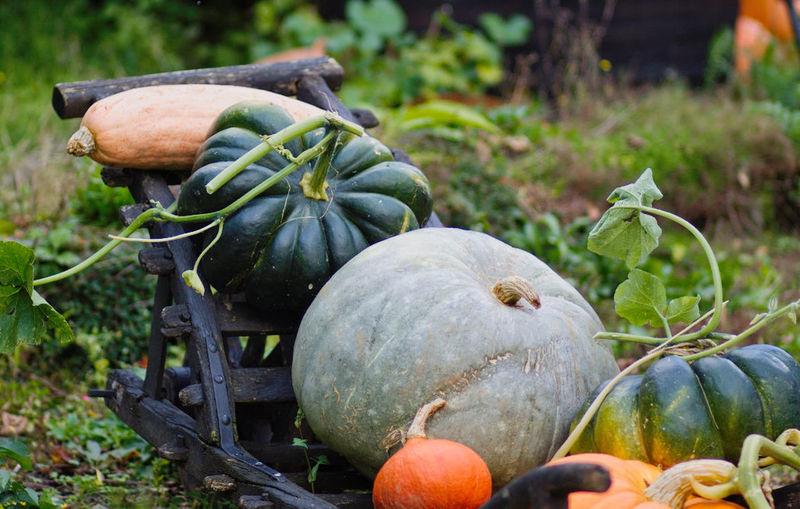 Autumn Close-up Day Field Focus On Foreground Food Food And Drink Freshness Healthy Eating Nature No People Outdoors Pumpkin Squash - Vegetable Vegetable