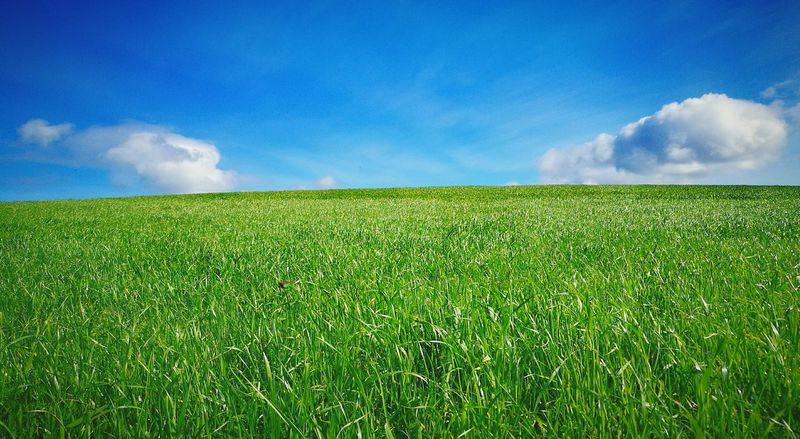 Springtime Green Color Sky Landscape Beauty In Nature Scenics No People Low Angle View Freshness Nature Rural Scene Outdoors Cloud - Sky Field Tranquility Cornwalluk Huawei P 9