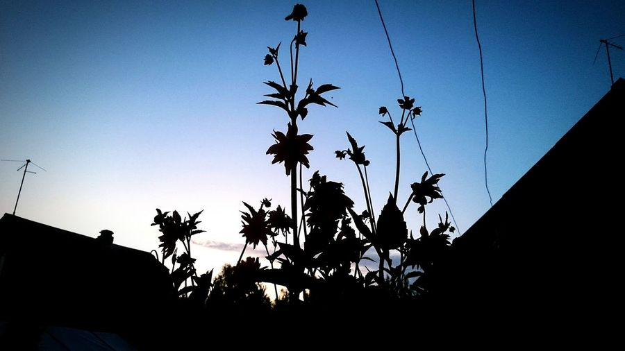 Summer Check This Out Sky Sky_collection Sunset Russian Nature Relaxing Russia Flowers