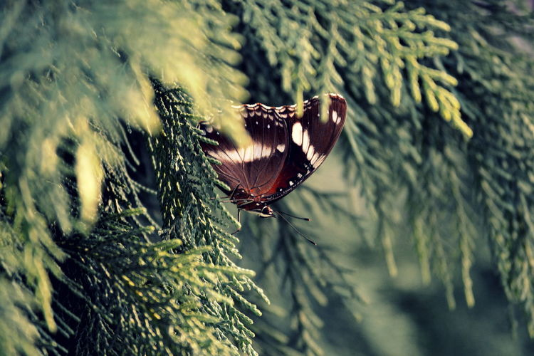 Close-Up Of Butterfly On Tree