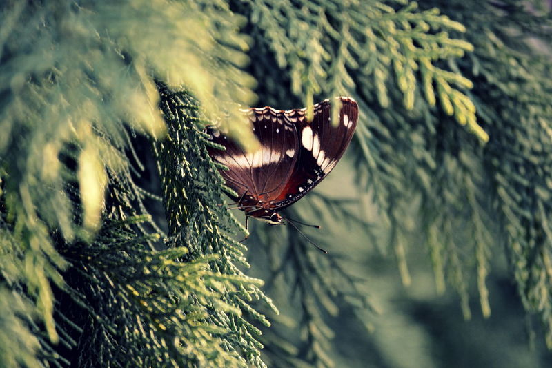 Butterfly Insects  Nature New Caledonia