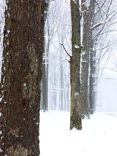 Winter Wonderland Blizzard2017 Snow Snow Trees Winter Woods