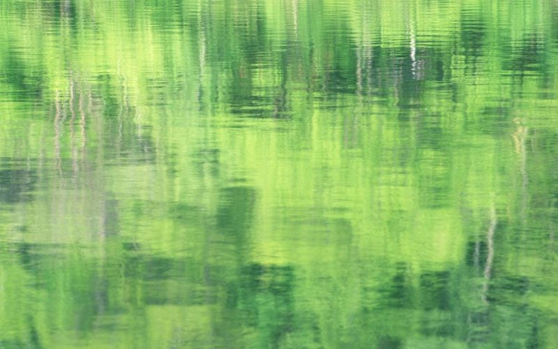 Backgrounds Beauty In Nature Close-up Day Detail Full Frame Green Green Color Growth Nature No People Outdoors Reflection Rippled Tranquility Water Water Surface Colour Of Life