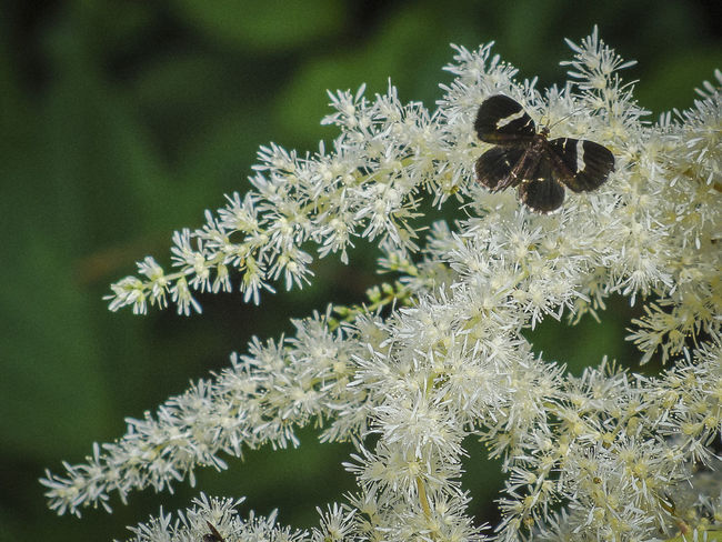 Beauty In Nature Botany Butterfly Close-up Day Focus On Foreground Fragility Freshness Green Color Growth Insect Nature Needle - Plant Part Outdoors Plant Scenics Spiked Spruce Tree Thorn Uncultivated