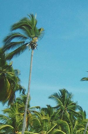 Ixtapa Guerrero Zihuatanejo Playa 🌴🌊☀