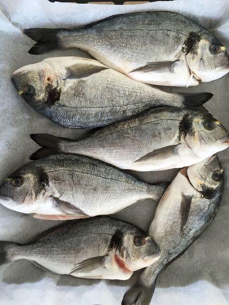 Close-up Detail Dorada Fishes Freshness Healthy Food Inthekitchen Nature