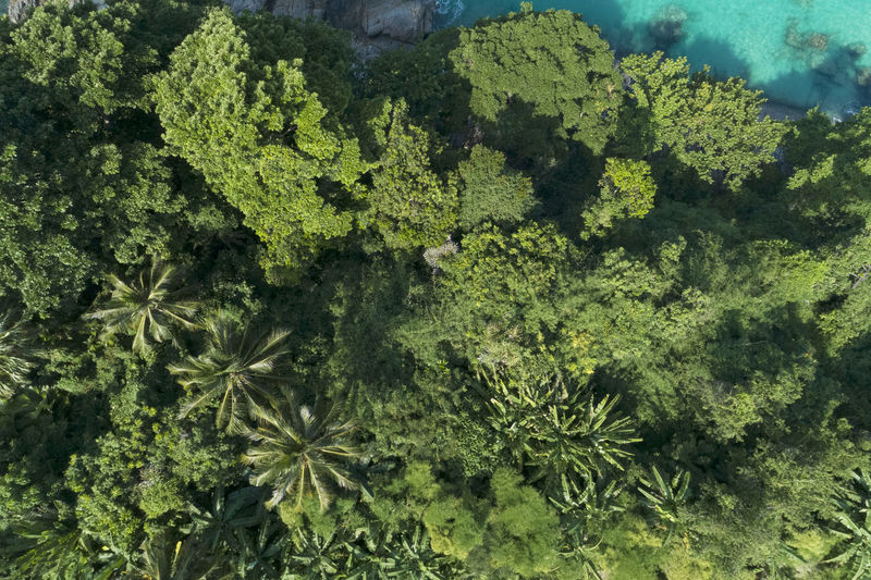 Aerial View Of Trees Growing In Forest During Sunny Day