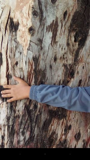 Holding A Big Tree Childhood Tree Hugging Trees Nature.