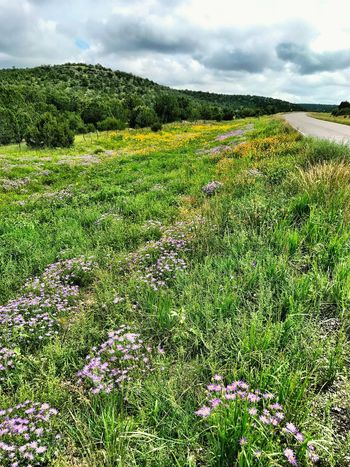 """""""Glory Road"""" A spectacular carpet of mixed wildflowers and grasses adorns rural Highway 42 in Central New Mexico in the waning days of Summer. New Mexico Photography New Mexico Skies New Mexico Roadside America Highways Rural Rural Roads Wildflowers Roadsidephotography Roadside Green Color Sky Growth Nature Land Beauty In Nature Landscape Rural Scene Scenics - Nature"""
