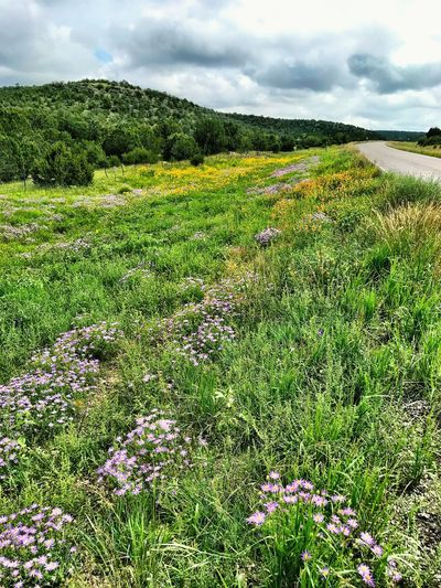 """Glory Road"" A spectacular carpet of mixed wildflowers and grasses adorns rural Highway 42 in Central New Mexico in the waning days of Summer. New Mexico Photography New Mexico Skies New Mexico Roadside America Highways Rural Rural Roads Wildflowers Roadsidephotography Roadside Green Color Sky Growth Nature Land Beauty In Nature Landscape Rural Scene Scenics - Nature"